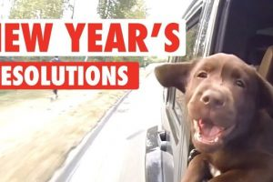 New-Years-Resolutions-As-Told-By-Pets
