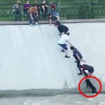 People Form Human Chain To Rescue Dog From Canal
