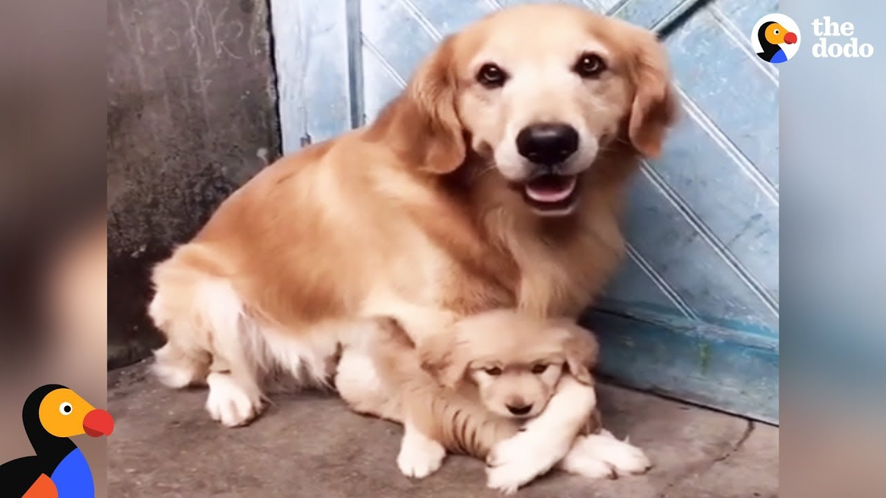 protective dog dad won t let anyone near his puppy 1funny com