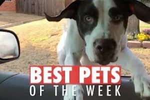 Best-Pets-of-the-Week-Video-Compilation-February-2018-Week-2