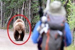 11-FEISTIEST-Bears-Ever