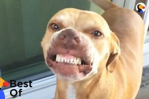 Funny-Dogs-and-Cats-With-Signature-Moves-The-Dodo-Best-Of