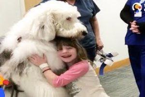 Huge-Dog-Helps-Sick-Kids-Feel-Better-The-Dodo