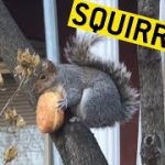 Funny Squirrels!