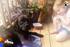 Stray-Dog-Shows-Up-on-Couples-Porch-And-Changes-Their-Mind-About-Dogs-The-Dodo-Pittie-Nation