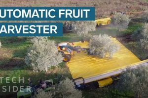 These-Machines-Shake-Olives-Off-Trees-And-Collect-Them-In-Giant-Sheets