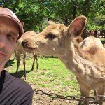 Nara Deer Park, Japan