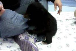 Adorable-bear-cub