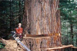Amazing-Dangerous-Skills-Fastest-Tree-Felling-Heavy-Biggest-Tree-Cutting-Down-Machines