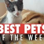 Best Pets of the Week Video Compilation | April 2018 Week 2