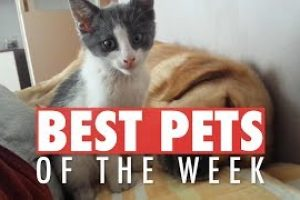 Best-Pets-of-the-Week-Video-Compilation-April-2018-Week-2