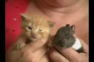 Cat-Adopts-Baby-Rabbit