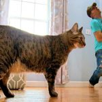 Faking My Death in Front of My Cat