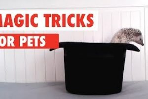 Magic-Tricks-and-Magic-Pets