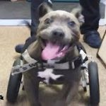 Rescued Pit Bull Puppy Runs For The First Time