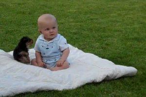 Yorkie-puppy-attack-my-baby-boy