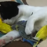 Heartwarming Animal Friendships
