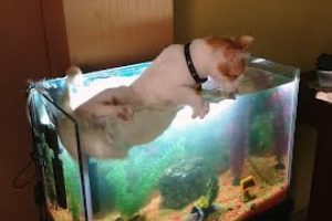 Cats-vs.-Fish-Tanks-Compilation-CFS