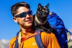 The-Backpacking-Cat-Who-Travels-The-US-With-His-Human