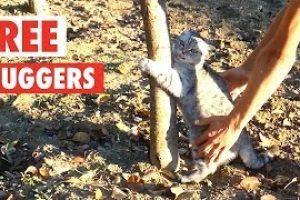 Tree-Huggers-Funny-Pet-Compilation-2018