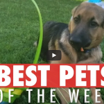 Best Pets of the Week | May 2018 Week 1