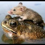 32 Of The Most Unlikely Animal Relationships