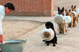BEST-TRAINED-DISCIPLINED-DOGS