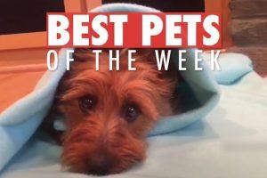 Best-Pets-of-the-Week-June-2018-Week-2