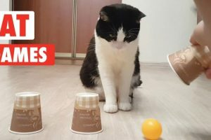 Cat-Games-Playful-Cats-Video-Compilation