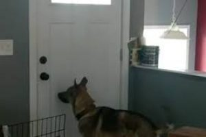 Dog-Jumps-for-Joy-After-Owner-Returns-Home-990165