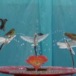 Hummingbirds Bathing 10min Community Bath with Goldfinches & House Finches