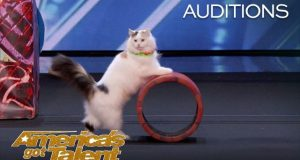 The-Savitsky-Cats-Super-Trained-Cats-Perform-Exciting-Routine-Americas-Got-Talent-2018