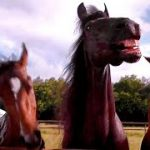 Horses Laughing at a Guy Trying to Park a Trailer