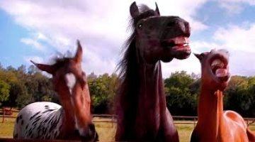 Volkswagen-Tiguan-Horses-Laugh-Commercial-2016