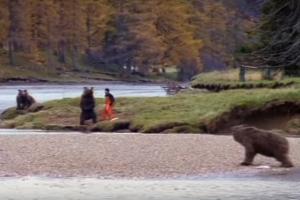 bear-encounter