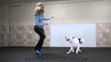 Boogie Shoes Canine Freestyle Routine