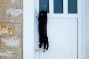 Clever Cats Opening Doors
