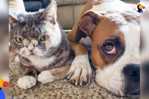 Dog Falls In Love With Very Special Cat