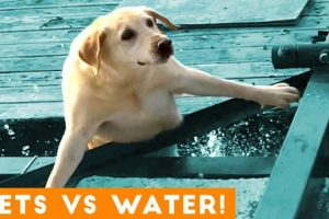 Funniest Pets Playing with Water Compilation of 2018