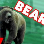 Funny Awesome Bears 2016