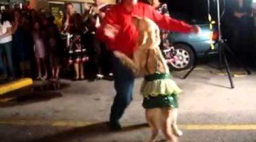 Golden Retriever Salsa Dance
