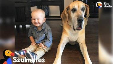 Massive Dog Takes Care Of His Favorite Little Boy