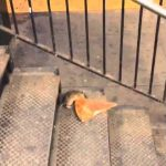 New York City Rat Taking Pizza Home on the Subway