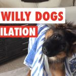 Silly Willy Dogs 2016
