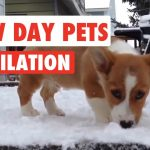 Snow Day Pets 2016