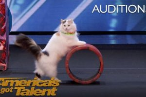 Super Trained Cats Perform Exciting Routine
