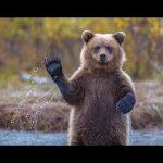 Top 10 Funny Animal Videos 2015