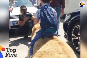 Bear-Chained-For-Selfies-Finally-Runs-Free-Animals-Freedom-Stories-The-Dodo-Top-5