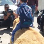 Bear Chained For Selfies Finally Runs Free + Animals Freedom Stories