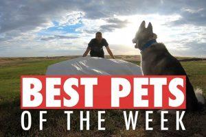 Best-Pets-of-the-Week-July-2018-Week-2